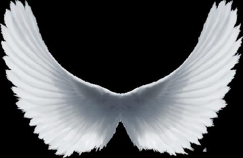 Aile D Ange ailes d'ange
